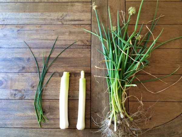 Leeks and Chives